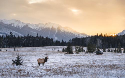 4 (vraies) raisons de vivre plus proche de la nature !